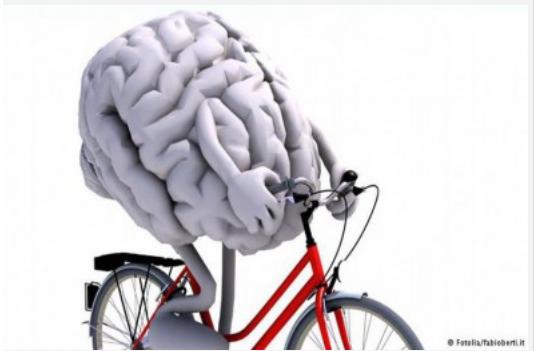 المخ الكبير يزيد الذكاء لكنه لا يخلو من المخاطر